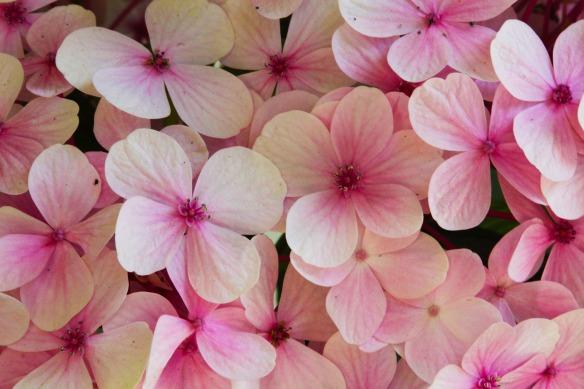 flowers-4474717_1920