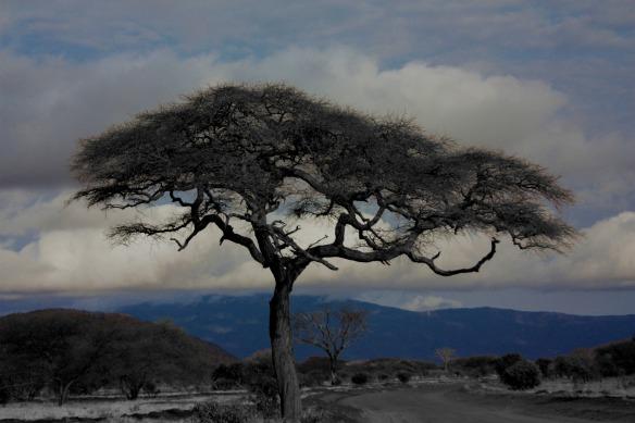 tree-16878_1920