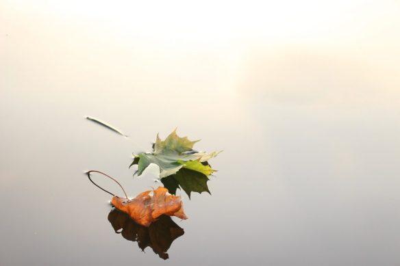 maple-leaves-690233_1920-1024x683