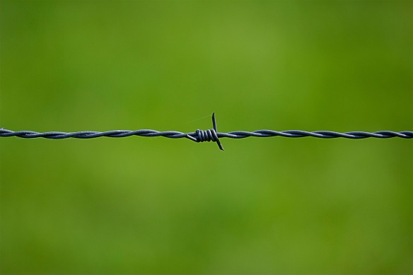 barbed-wire-250822