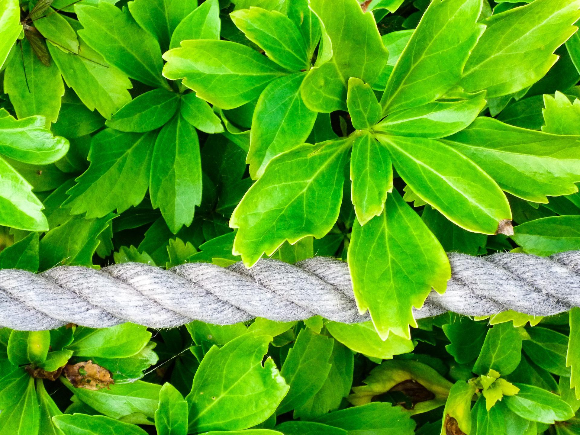 leaf-3092677_1920