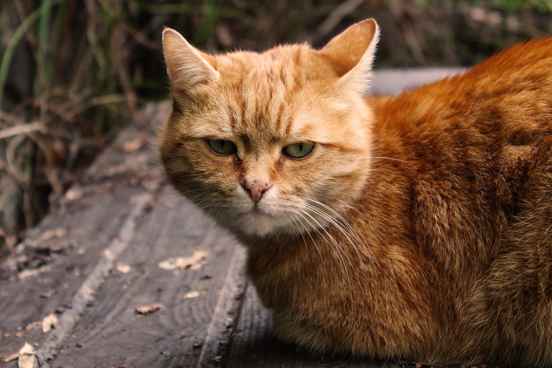 cat-4169713_1920